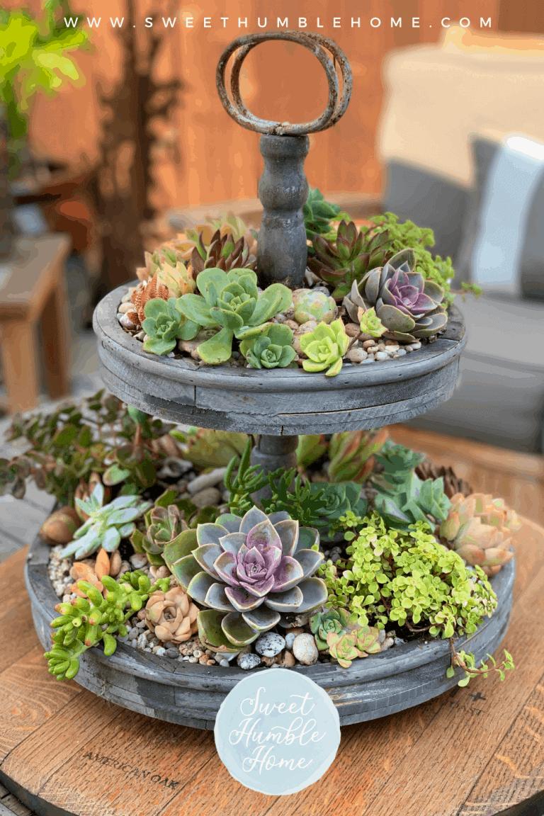 Live Plant Centerpiece Ideas
